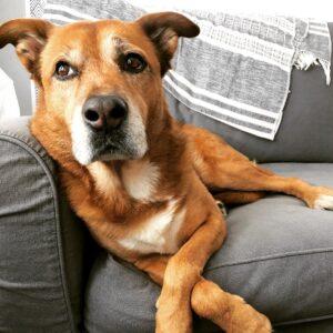 Dog_Abby